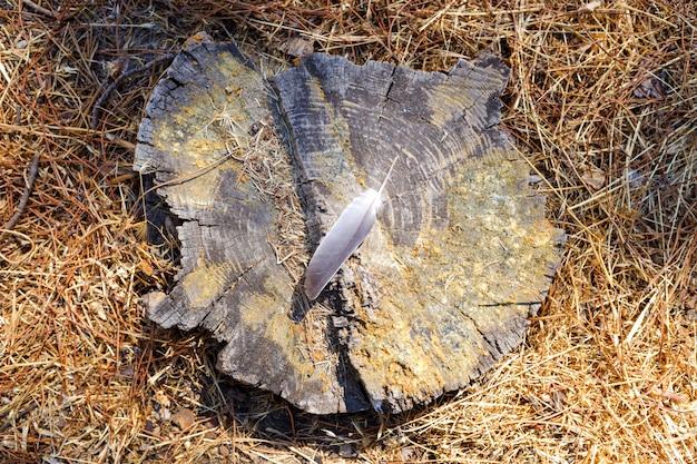 Pena de pássaro no tronco cortado de uma árvore