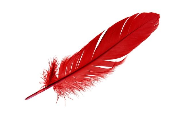 Pena de pássaro vermelho bonito isolada em um fundo branco