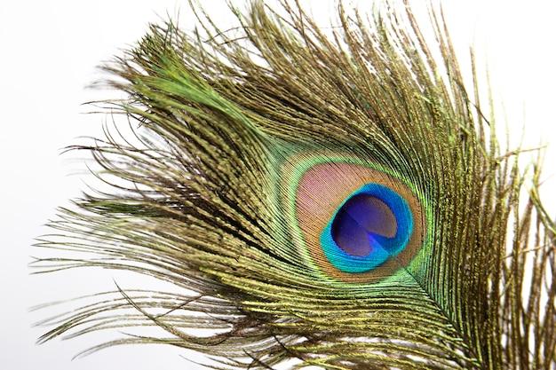 Pena de pavão colorido.