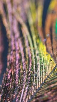 Pena de pavão macro turva abstrata