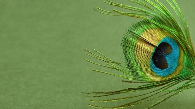 Pena de pavão na mesa verde