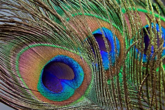 Pena de pavão