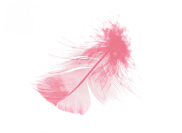 Pena rosa coral sobre fundo branco