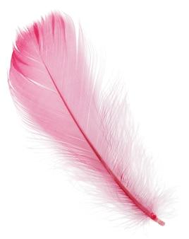 Pena rosa suave isolada