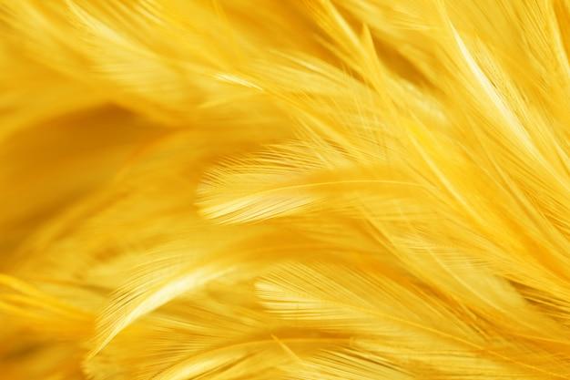 Penas amarelas de pássaros e galinhas no estilo macio e desfocado
