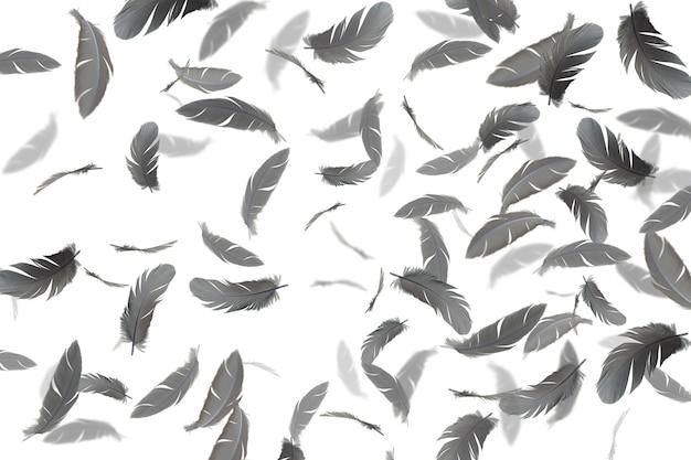 Penas cinzentas flutuando no ar. isolado no fundo branco.