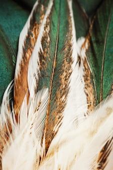 Penas coloridas brilhantes de algum pássaro