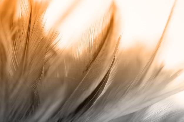 Penas coloridas de pássaros e galinhas em um estilo suave e desfocado para o fundo
