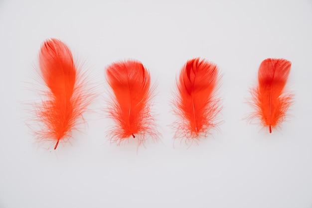 Penas coloridas vermelhas brilhantes em linha