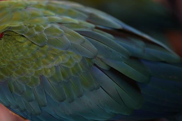 Penas de arara escarlate, textura colorida