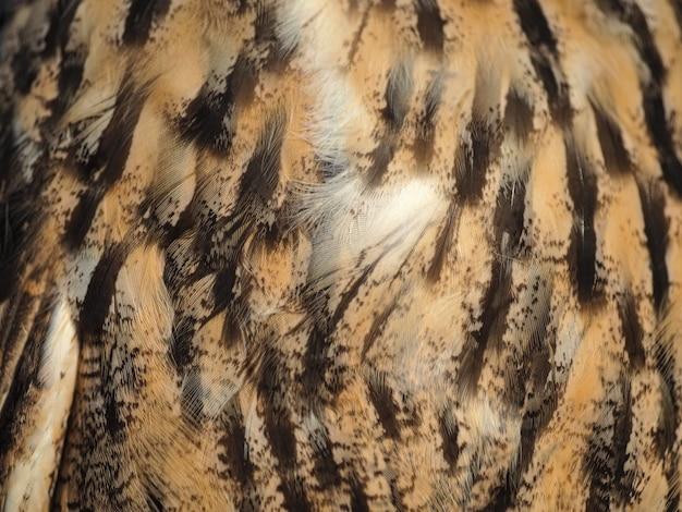 Penas de coruja selvagem fechem para segundo plano.