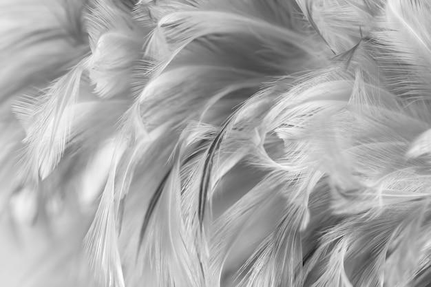 Penas de frango cinza em estilo macio e desfoque para o fundo, preto e branco