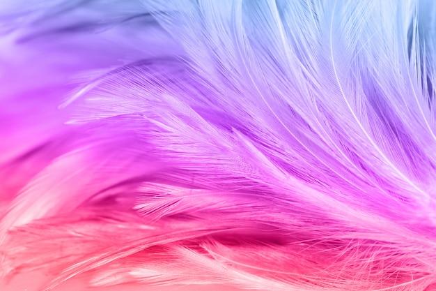 Penas de frango colorido no estilo macio e desfoque para o fundo. textura de pássaro