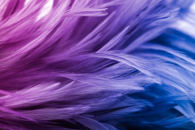 Penas de frango colorido no estilo suave e borrão para o fundo