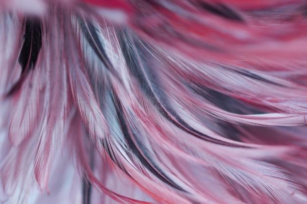 Penas de frango colorido no estilo suave e borrão para plano de fundo