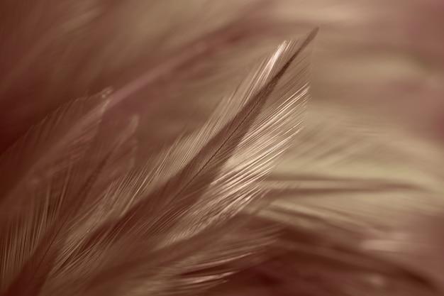 Penas de frango em estilo suave e borrão para o fundo