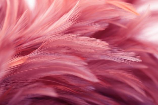 Penas de frango rosa em suave e estilo borrão para plano de fundo