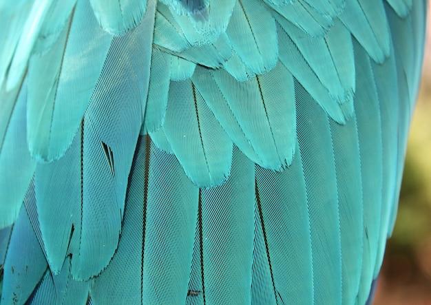 Penas de papagaio azul. fundo