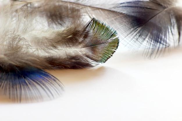 Penas de pássaros coloridas caídas no papel branco