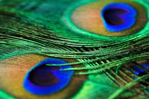 Penas de pavão coloridas criativas. foco seletivo, close-up.