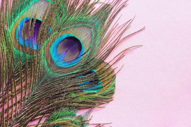 Penas de pavão coloridas e artísticas
