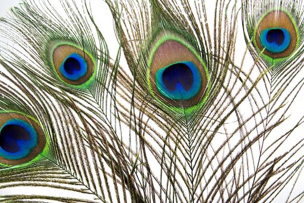 Penas de pavão isoladas no fundo branco