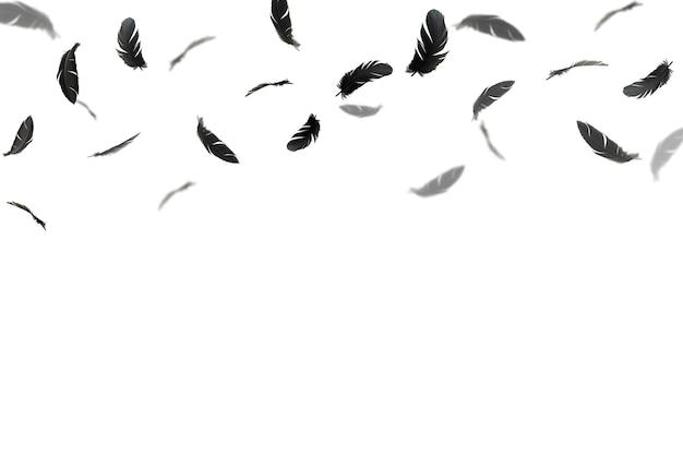Penas pretas flutuando no ar. isolado no fundo branco.