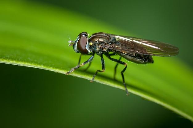 Peneire a mosca empoleirada em uma folha com um lindo fundo verde