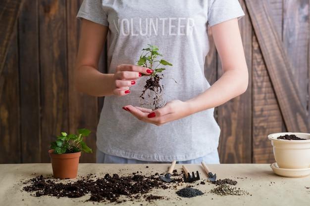 Pense em um lema verde. conceito de proteção e cuidado da natureza. voluntário envolvido no repotting de plantas.