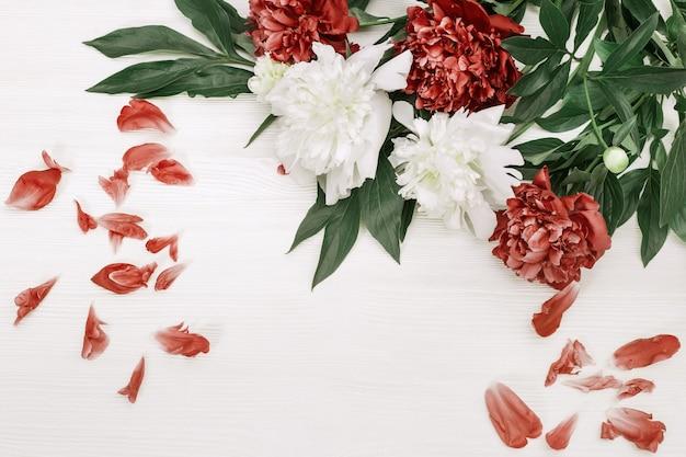 Peônias brancas e vermelhas com pétalas caídas no fundo de madeira branco com espaço da cópia. vista do topo. postura plana.