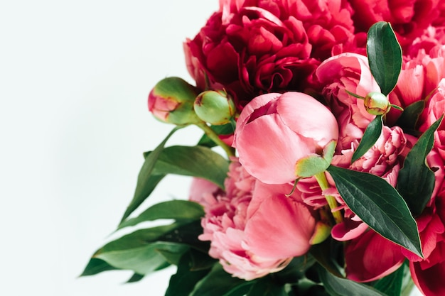 Peônias corais vivas e fofas. flores. um buquê de peônias exuberantes rosa e vermelhas brilhantes.