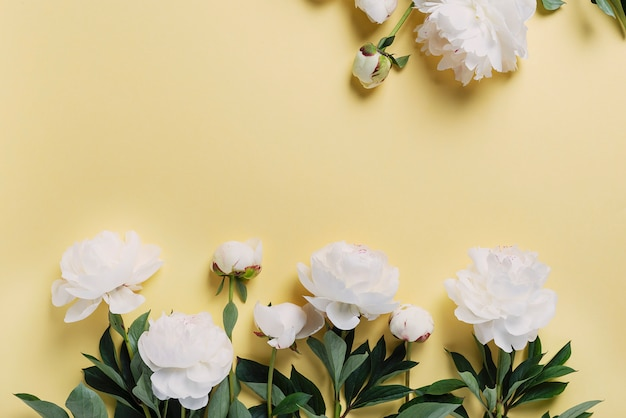 Peônias elegantes brancas na parede amarela