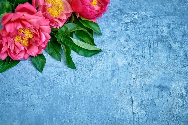 Peônias rosa em fundo azul brilhante