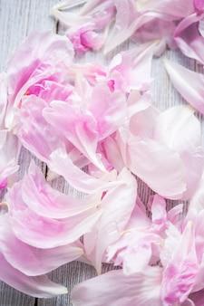 Peônias rosa
