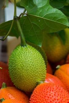 Pepino da primavera, gac, baby jackfruit (momordica cochinchinensis
