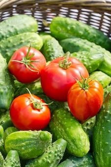 Pepinos e tomates em uma cesta de vime
