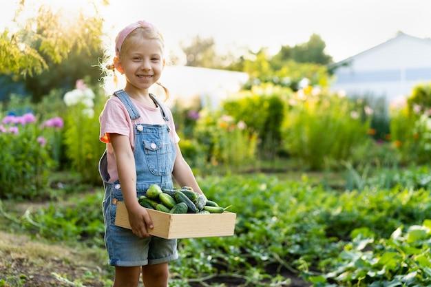 Pepinos frescos do jardim nas mãos de uma linda garota loira, produtos orgânicos, colheita de vegetais.