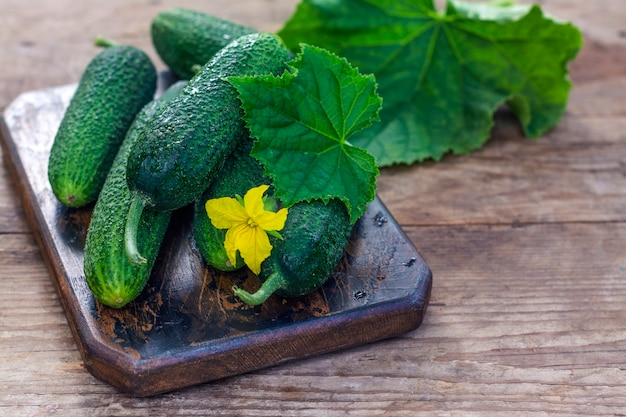 Pepinos orgânicos frescos