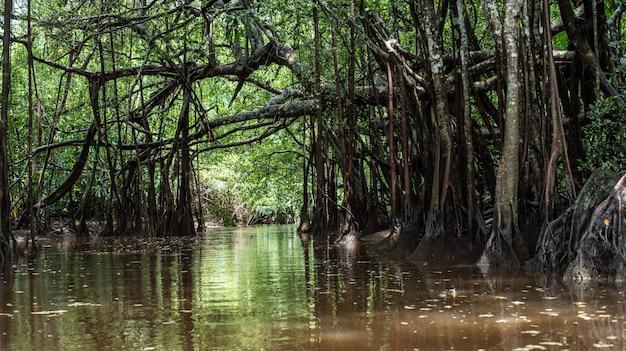 Pequena amazônia em pang-nga em sang nae canal tailândia