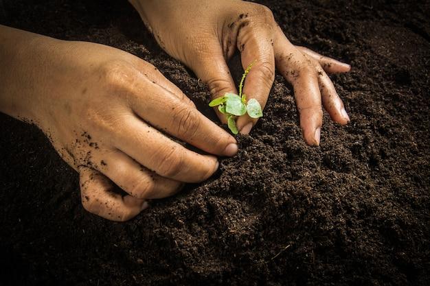 Pequena árvore com as mãos e o solo, fundo do solo