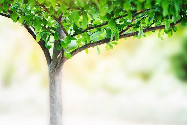 Pequena árvore com folhas crescem no jardim