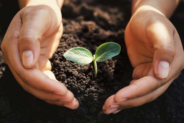 Pequena árvore crescendo na mão, cuidando de proteção com luz do sol