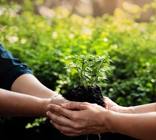 Pequena árvore e solo na mão humana, luz embaçada ao redor