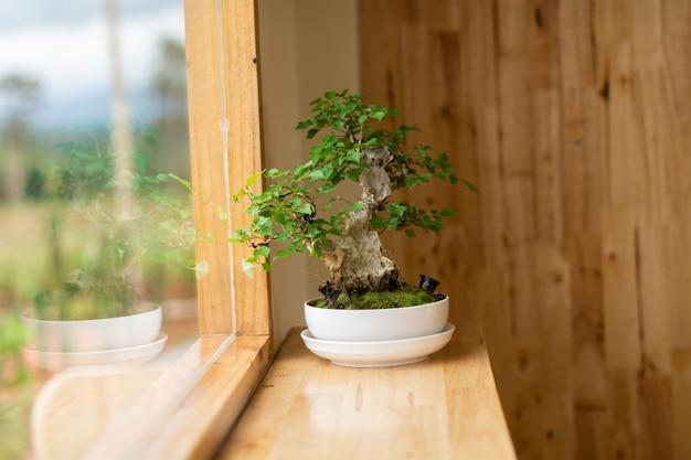 Pequena árvore em uma panela branca perto de uma janela de madeira