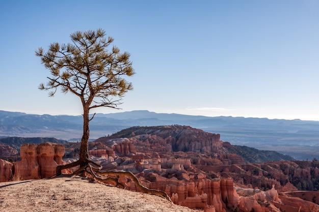 Pequena árvore existente na orla do bryce canyon