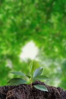Pequena árvore no solo