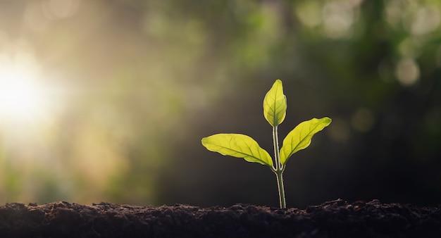 Pequena árvore que cresce no jardim com luz da manhã. conceito eco e salvar a terra