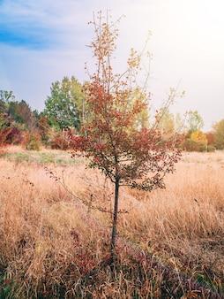 Pequena árvore solitária no meio de um prado na neblina.