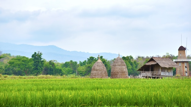 Pequena cabana em fazenda de arroz, fazenda de arroz no país da tailândia