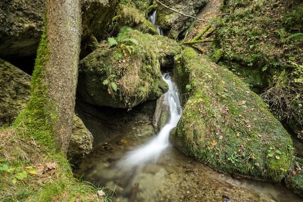 Pequena cachoeira flui através de uma floresta de conto de fadas
